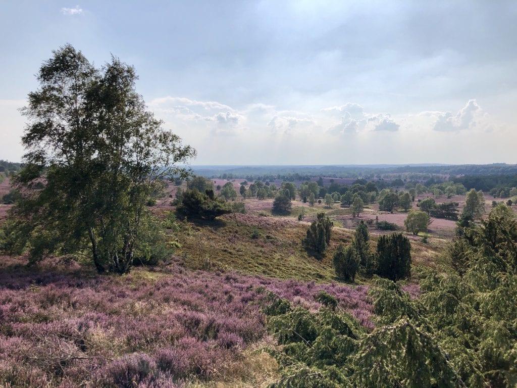 Blick vom Wilseder Berg in der Lüneburger Heide (Richtung Süden)