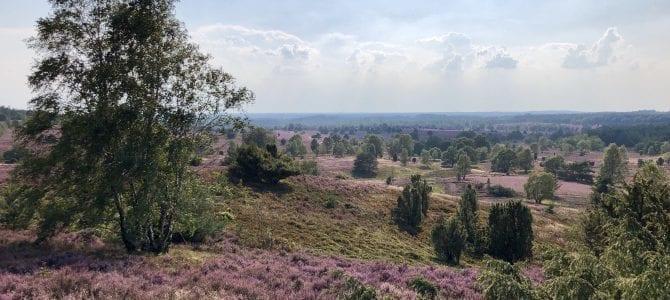 Wanderung in der Lüneburger Heide: Radenbachtal, Totengrund und Wilseder Berg