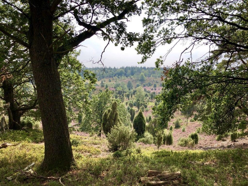 Der mystische Totengrund auf der Wanderung in der Lüneburger Heide