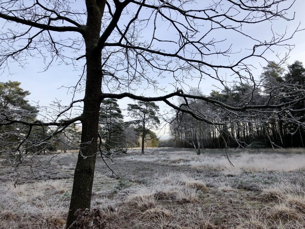 Winterliche Lüneburger Heide auf dem Heidschnuckenweg bei Handeloh