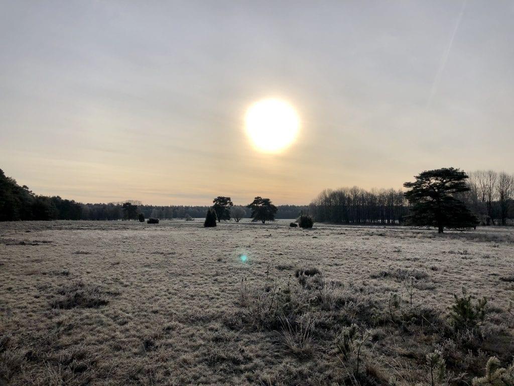 Winterliche Lüneburger Heide bei Handeloh
