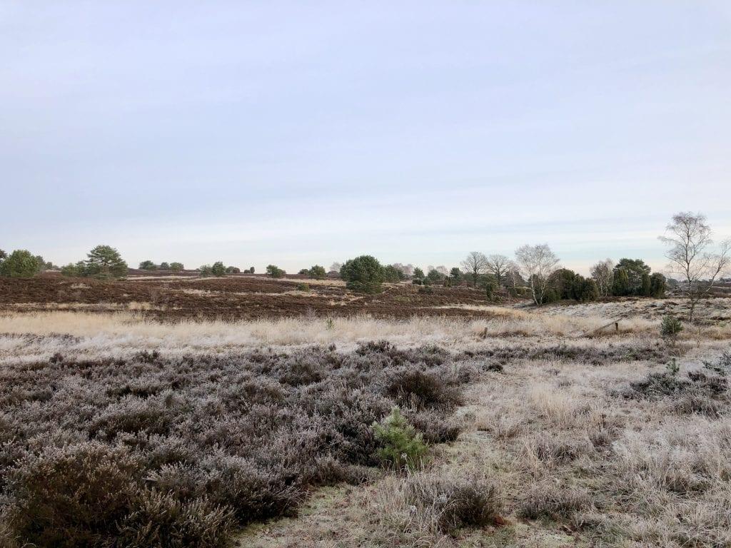 Winterliche Heidelandschaft nahe Undeloh auf dem Heidschnuckenweg in der Lüneburger Heide