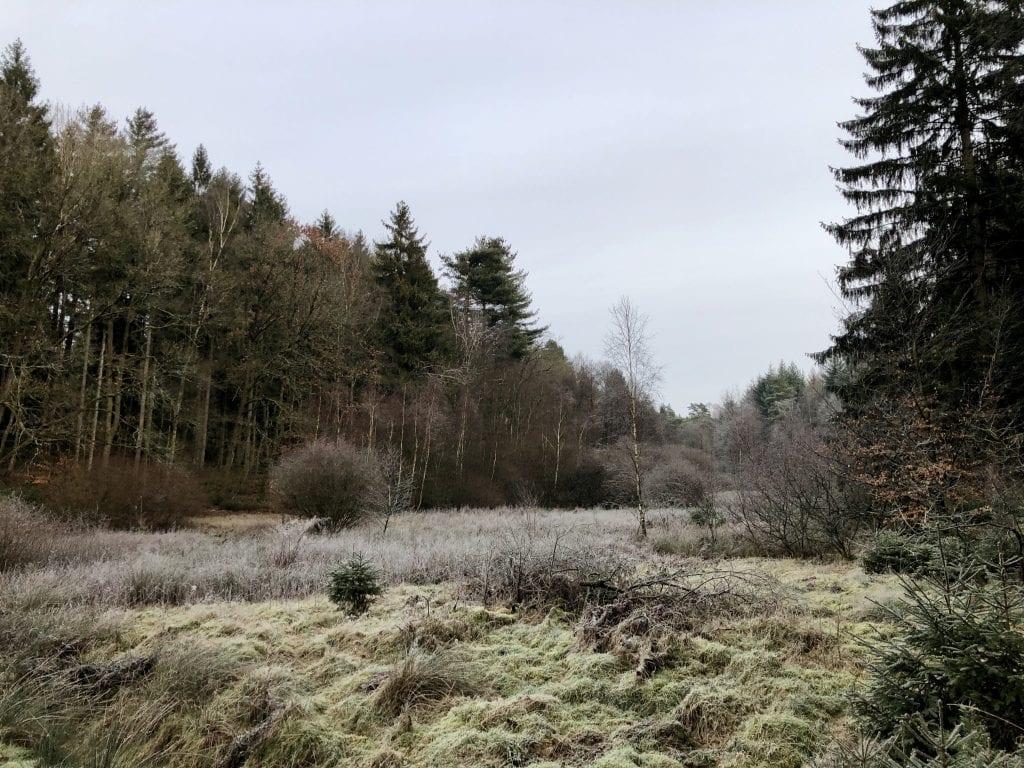 Winterliche Lichtung unweit von Egestorf