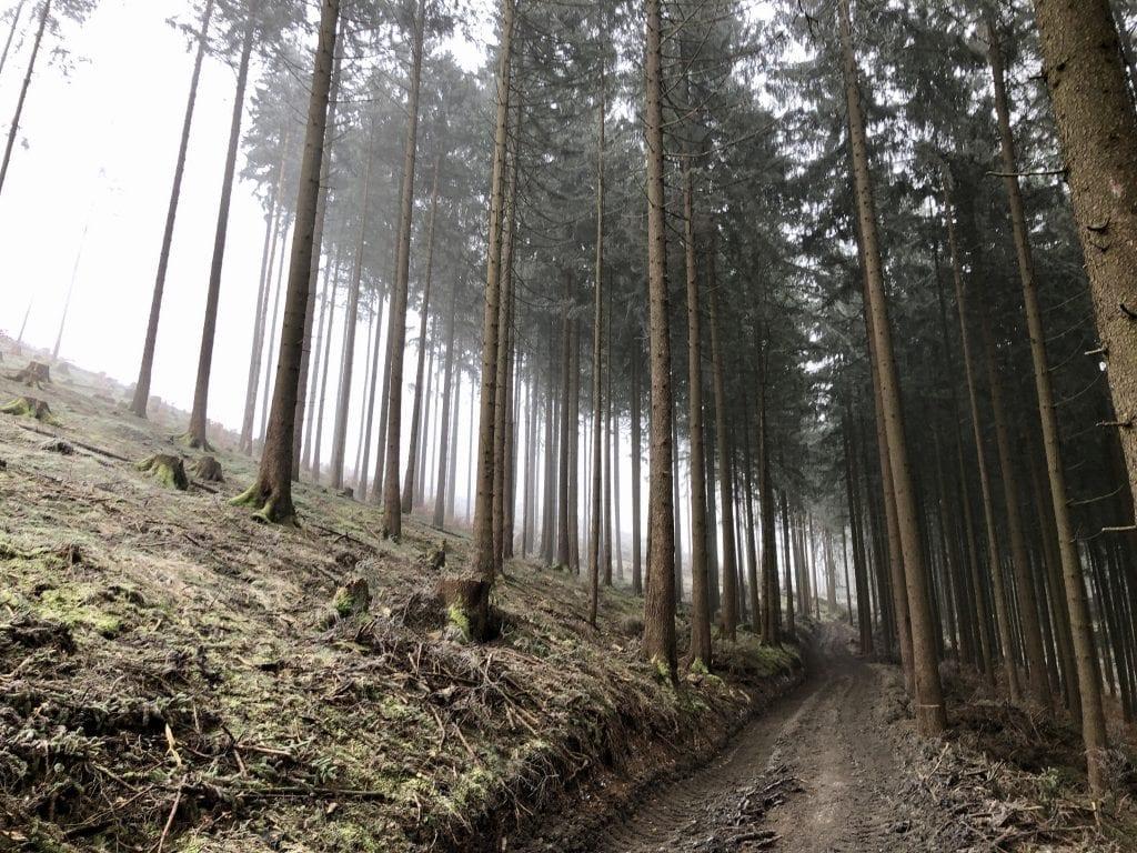 Den Weg geht es hoch: Wanderung zur Hanskühnenburg im Harz