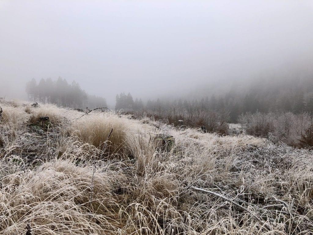 Eine reif-gefrorene Winterlandschaft im Harz