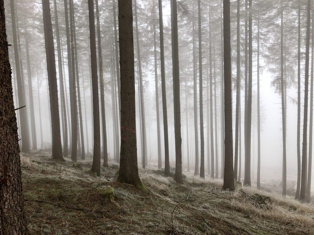 Winterlicher Wald im Harz