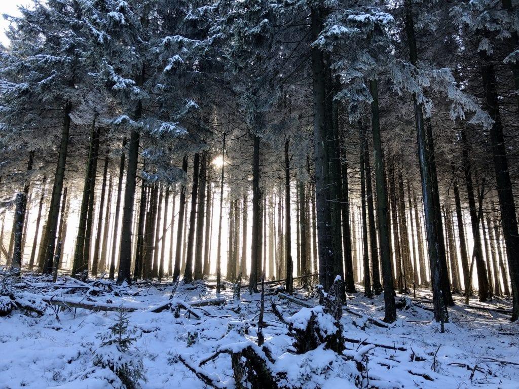 Winterlicher Wald im Westharz nahe der Hanskühnenburg