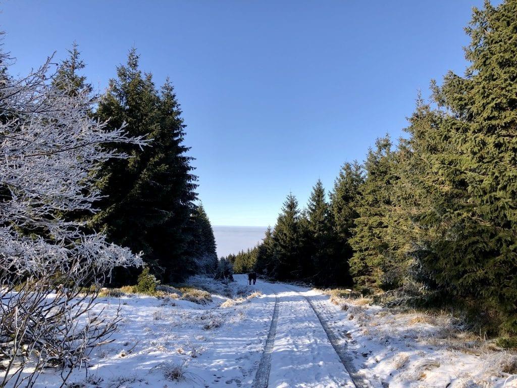 Wandern im Harz: Auf dem Weg zur Hanskühnenburg