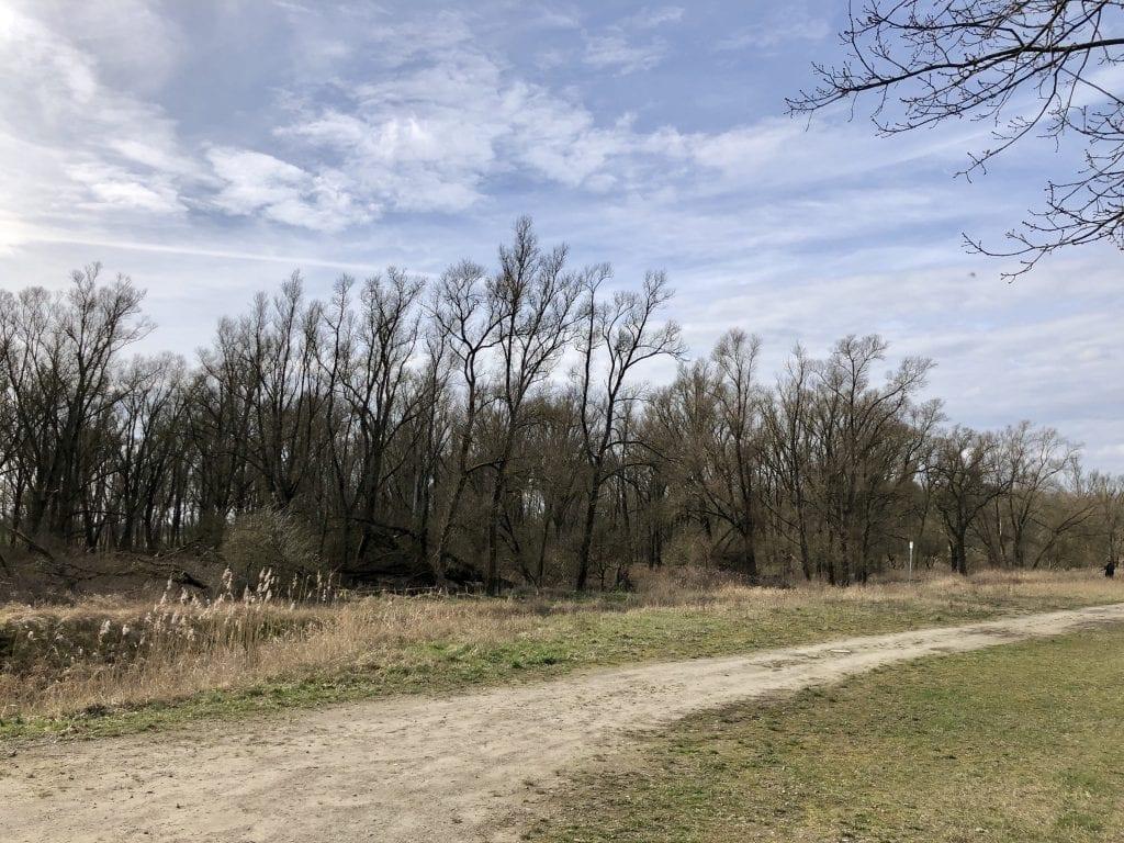 Vollhöfner Wald: An diesem Weg startet die Wanderung