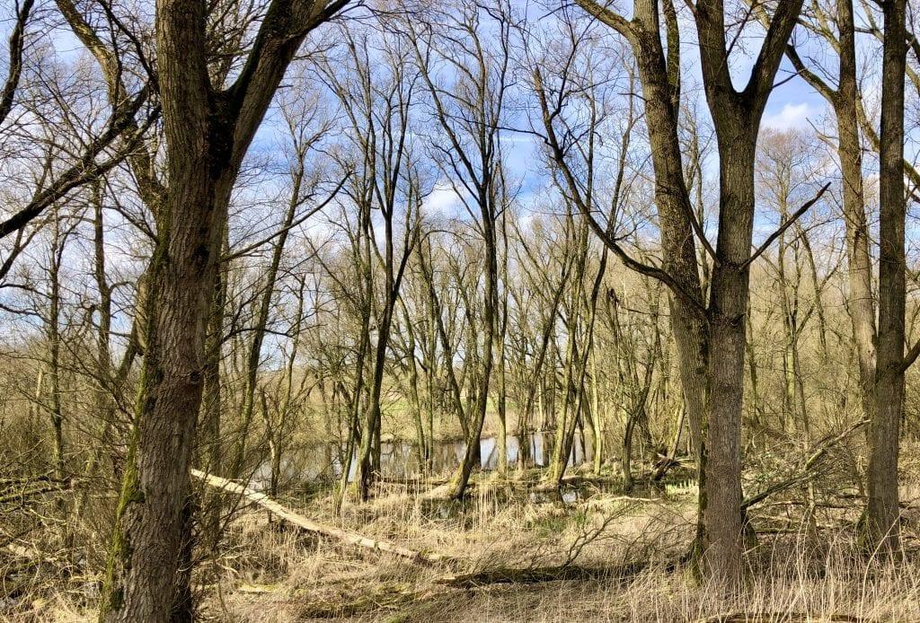 Urwald im Frühling beim Wandern im Vollhöfner Wald