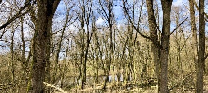 Wandern ins vergessene Land: Der Vollhöfner Wald in Hamburg-Altenwerder