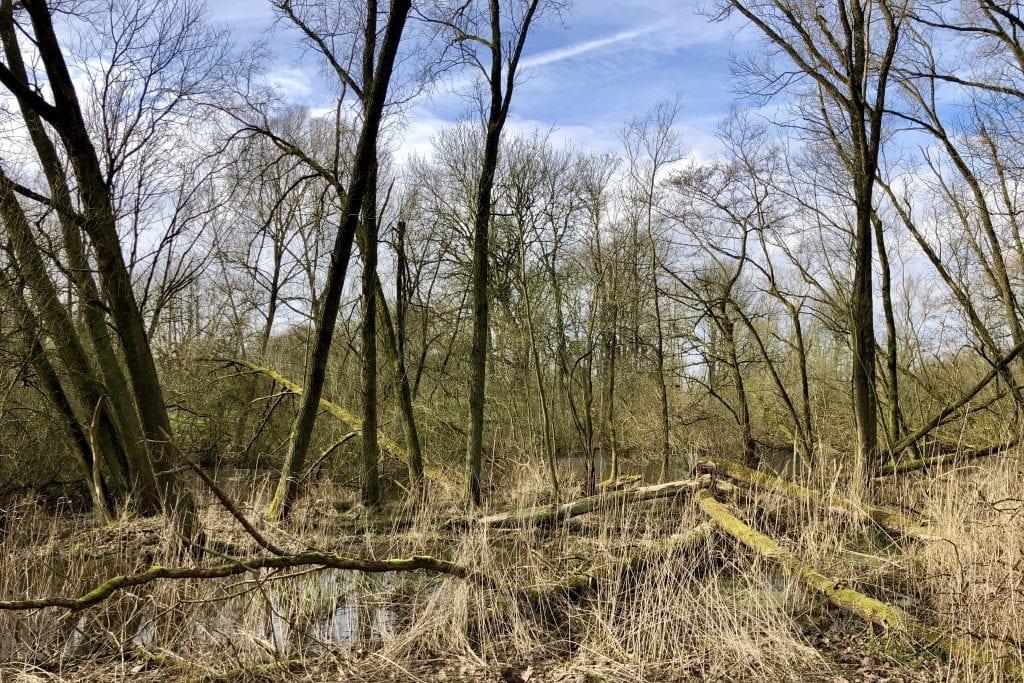 Urwald im Frühling beim Wandern im Vollhörner Wald (2)