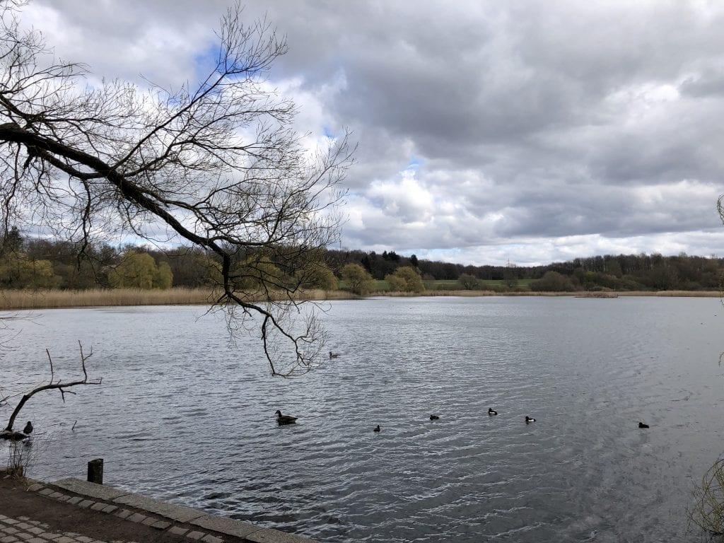 Am Westufer des Öjendorfer See in Hamburg | Spaziergang