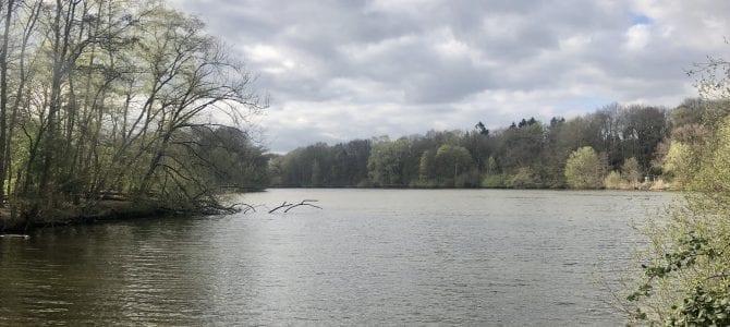 Spazieren gehen in Hamburg: Um den Bramfelder See und entlang der Seebek