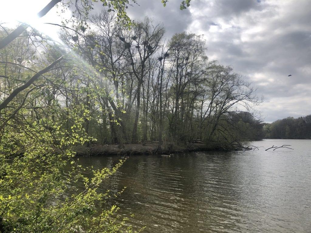 Spazieren gehen in Hamburg - Blick über den Bramfelder See mit Graureiherkolonnie