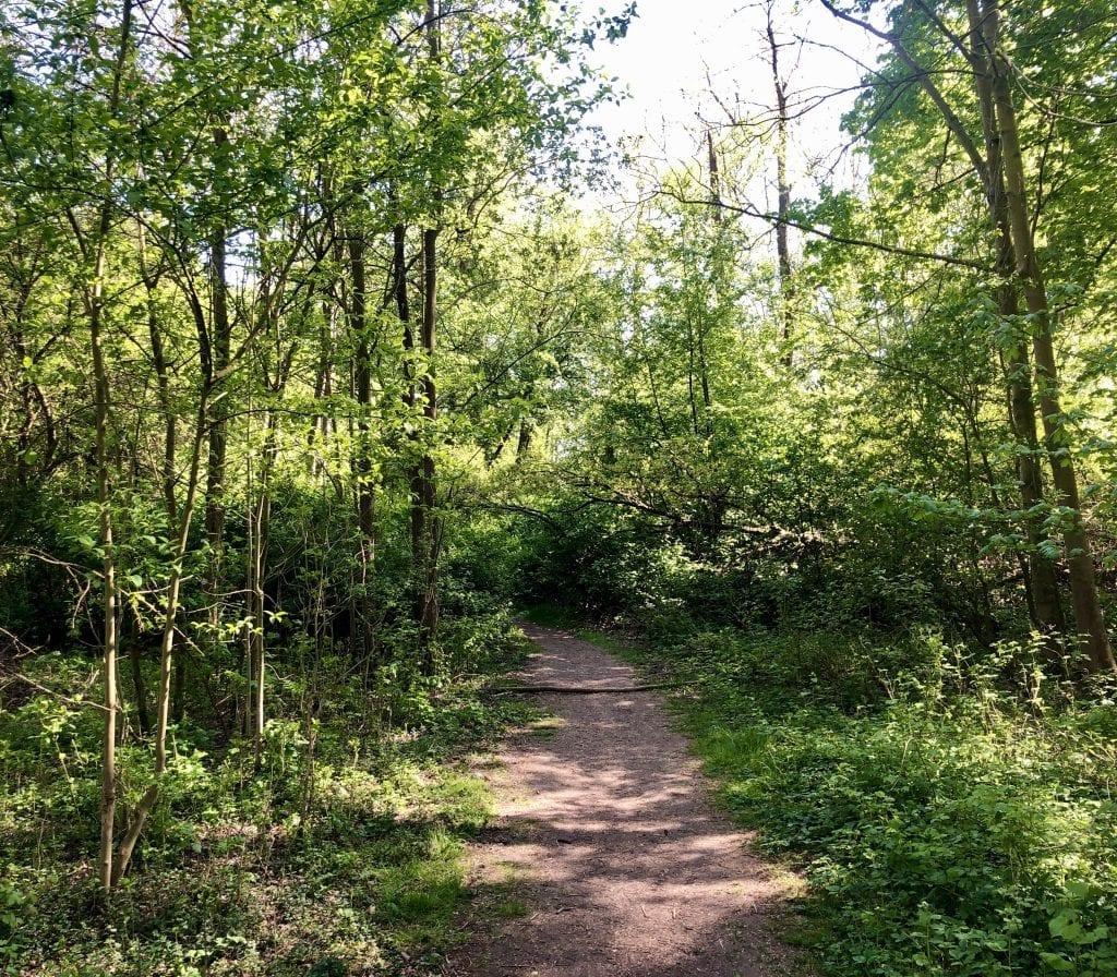 Wanderweg im Wald der Reit in Hamburg