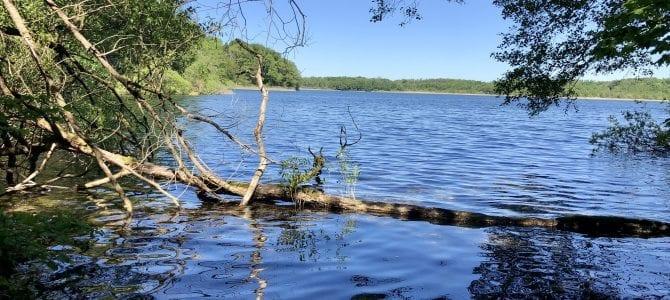 Wanderung am Schaalsee: Kampenwerder und der einsame Osten
