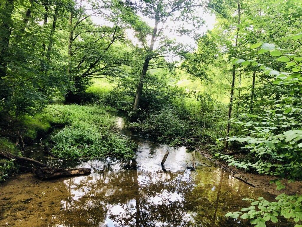 Der Hellbach im Naturschutzgebiet Hellbachtal
