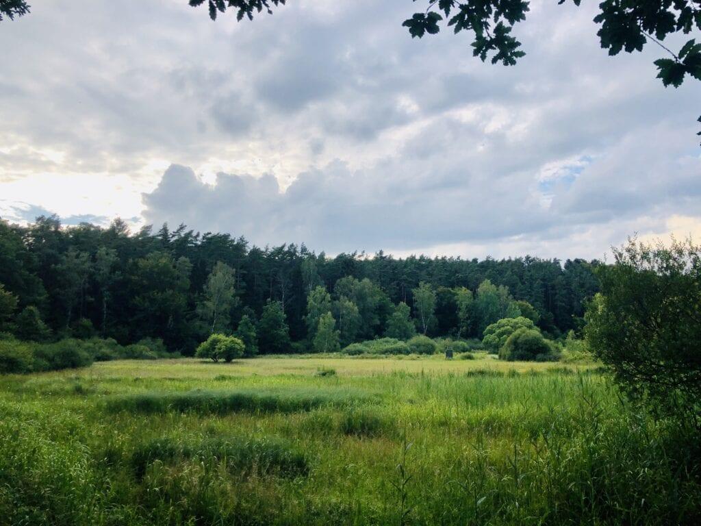 Landschaft im Naturschutzgebiet Hellbachtal in den Lauenburgischen Seen