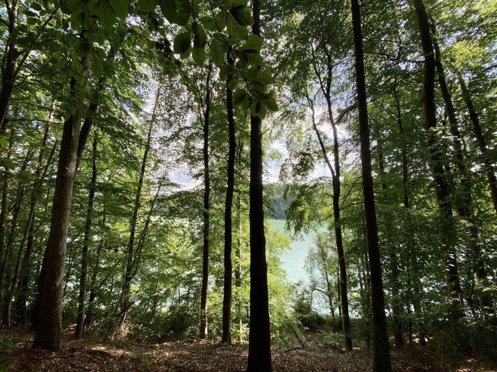 Wanderung am bewaldeten Westufer des Garrensees in Schleswig-Holstein