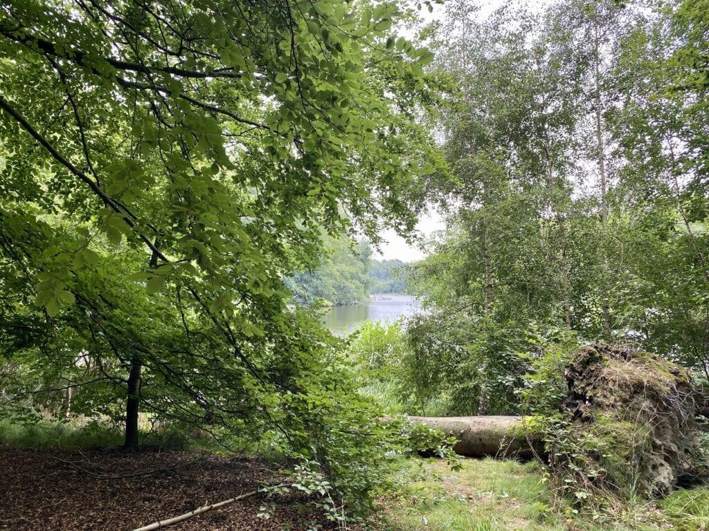 Am Ufer des Plötscher Sees im Naturschutzgebiet Salemer Moor
