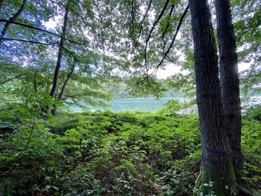 Blick über den Gartensee auf der Wanderung am Salemer Moor in Schleswig-Holstein