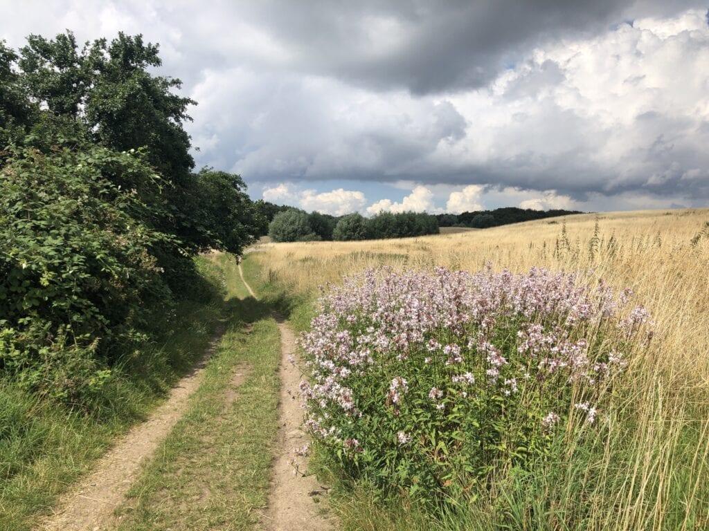 """Feldweg im Naturschutzgebiet """"Ostufer des Großen Ratzeburger Sees"""" bei Römnitz"""