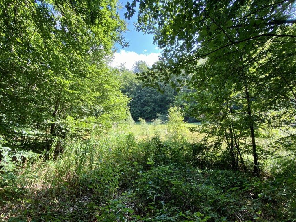 Idylle an der Schwarzen Kuhle auf der Wanderung im Salemer Moor in Schleswig-Holstein