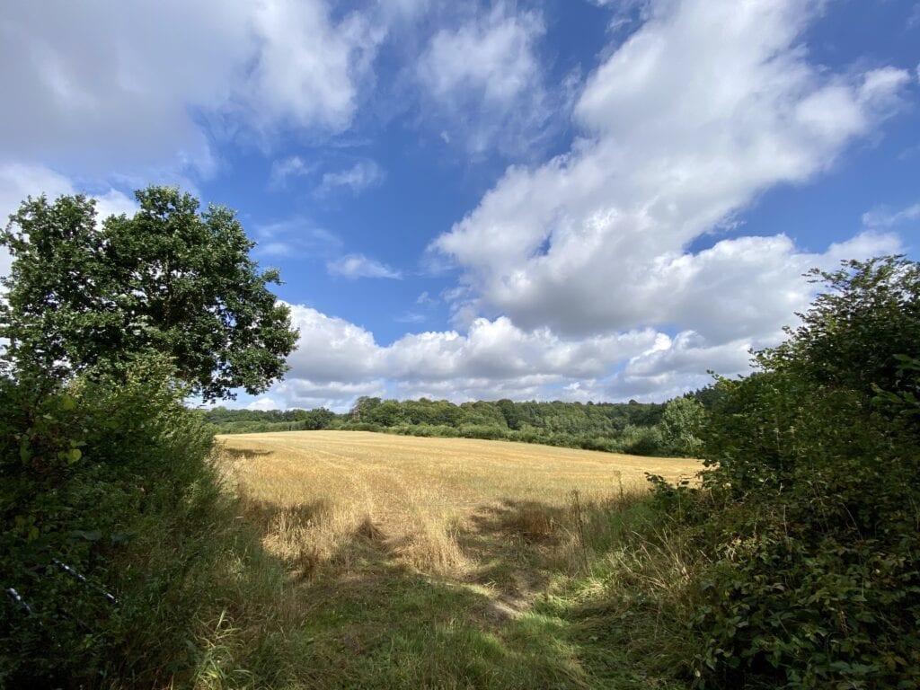 Wandern in der Landschaft im Naturschutzgebiet Salemer Moor