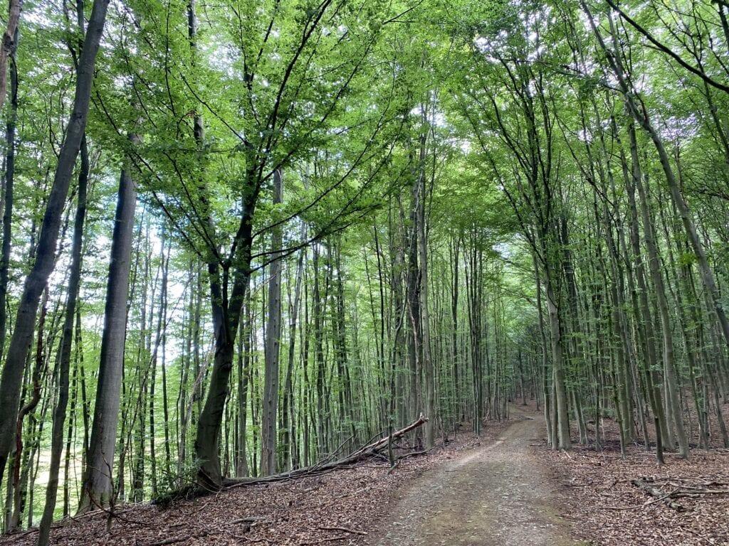 Wandern auf dem Wanderweg im Naturschutzgebiet Salemer Moor