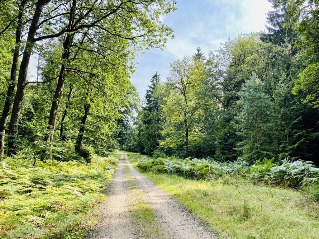 Der gut zu fahrende Waldweg zwischen Hanstedt und Undeloh