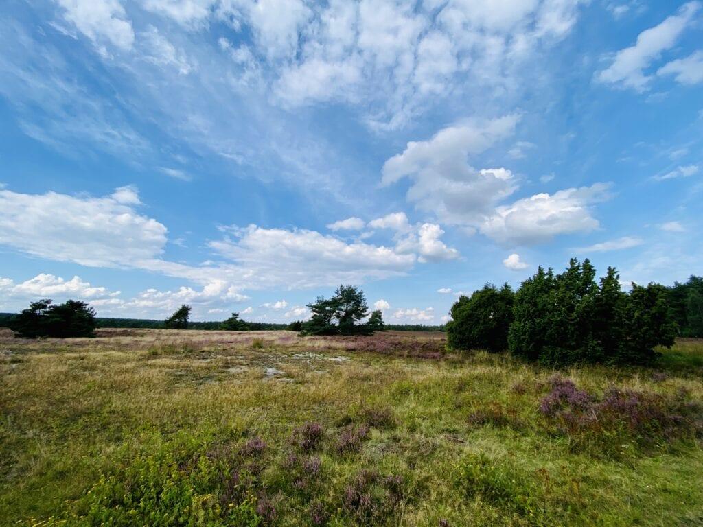 Die blühende Heide bei Hanstedt