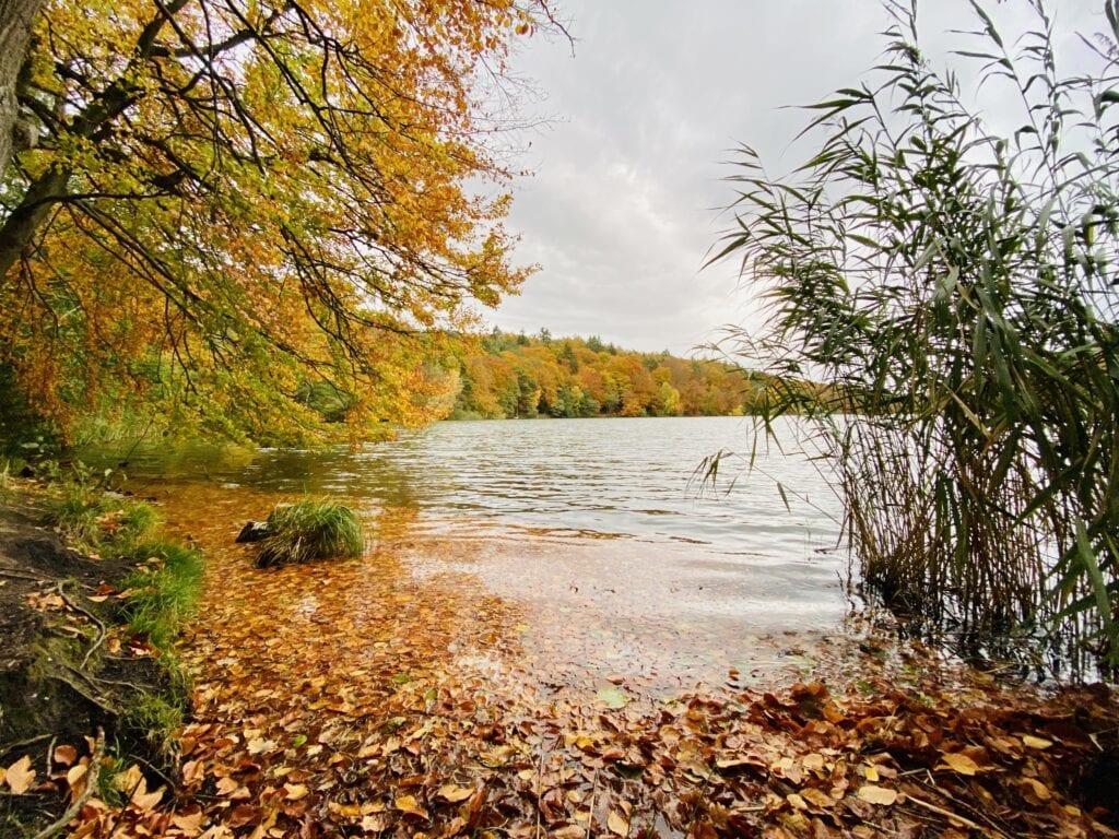 Am Ufer des Schmalsee in Mölln