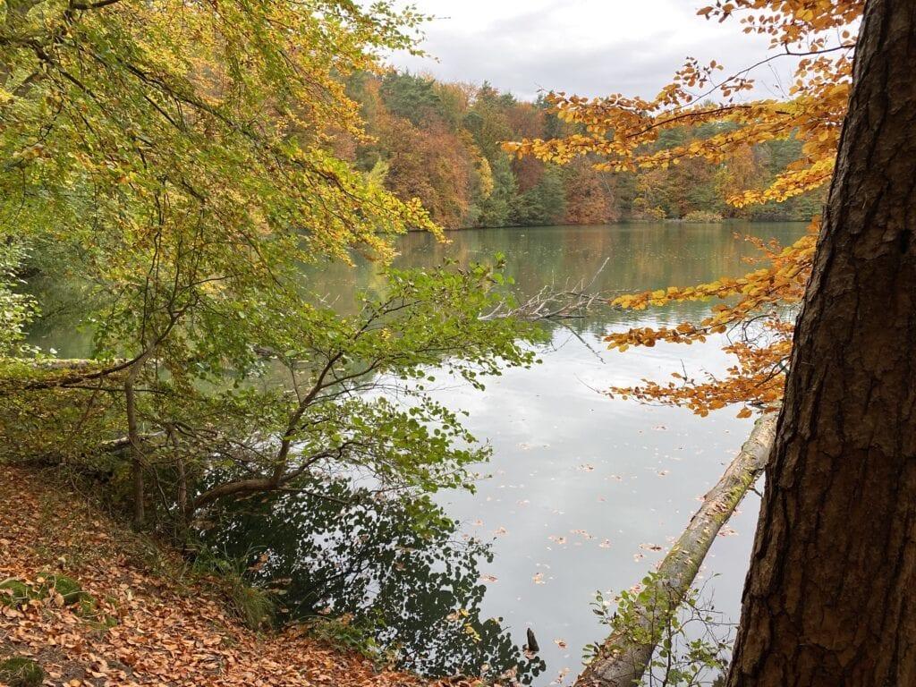 Am Ufer des Schmalssees bei Mölln