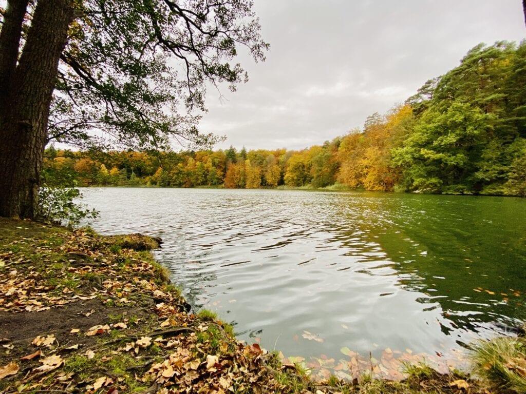 Herbstliche Idylle am Schmalsee im Herzogtum Lauenburg