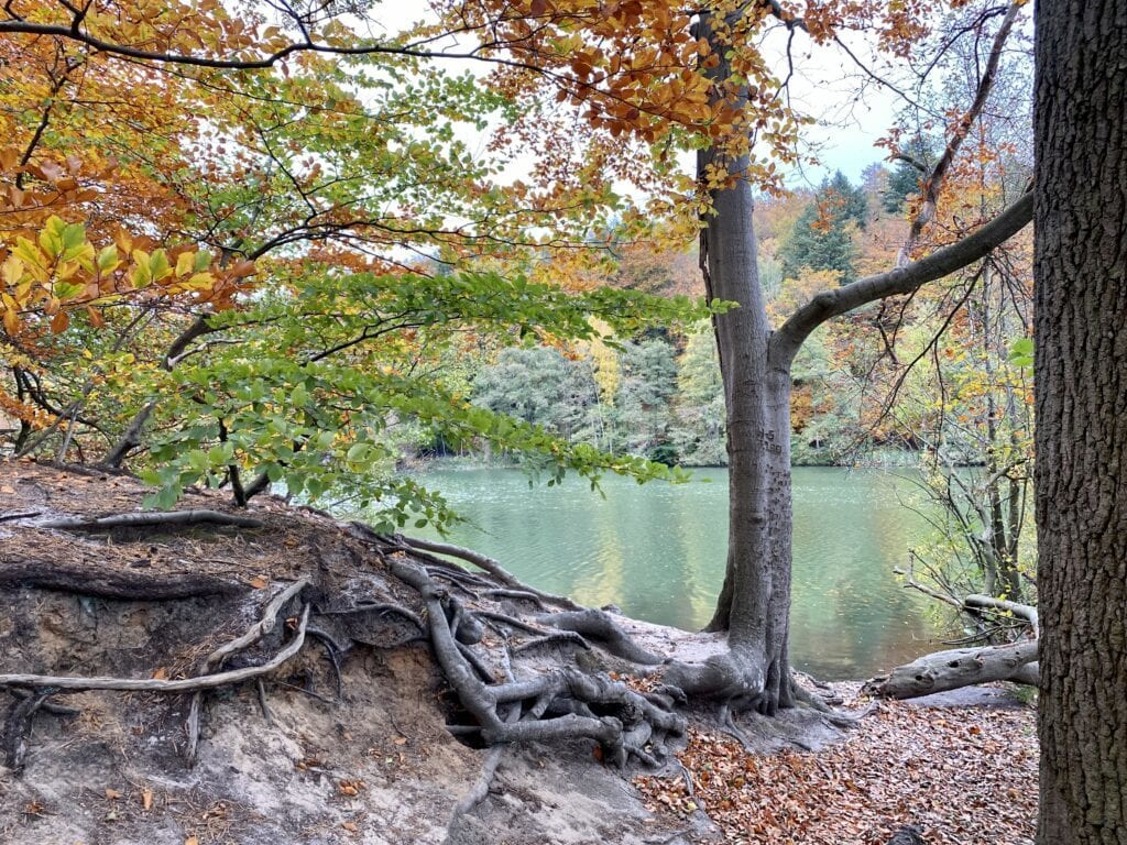 Idylle am Ufer - Herbstlicher Spaziergang um den Schmalsee bei Mölln