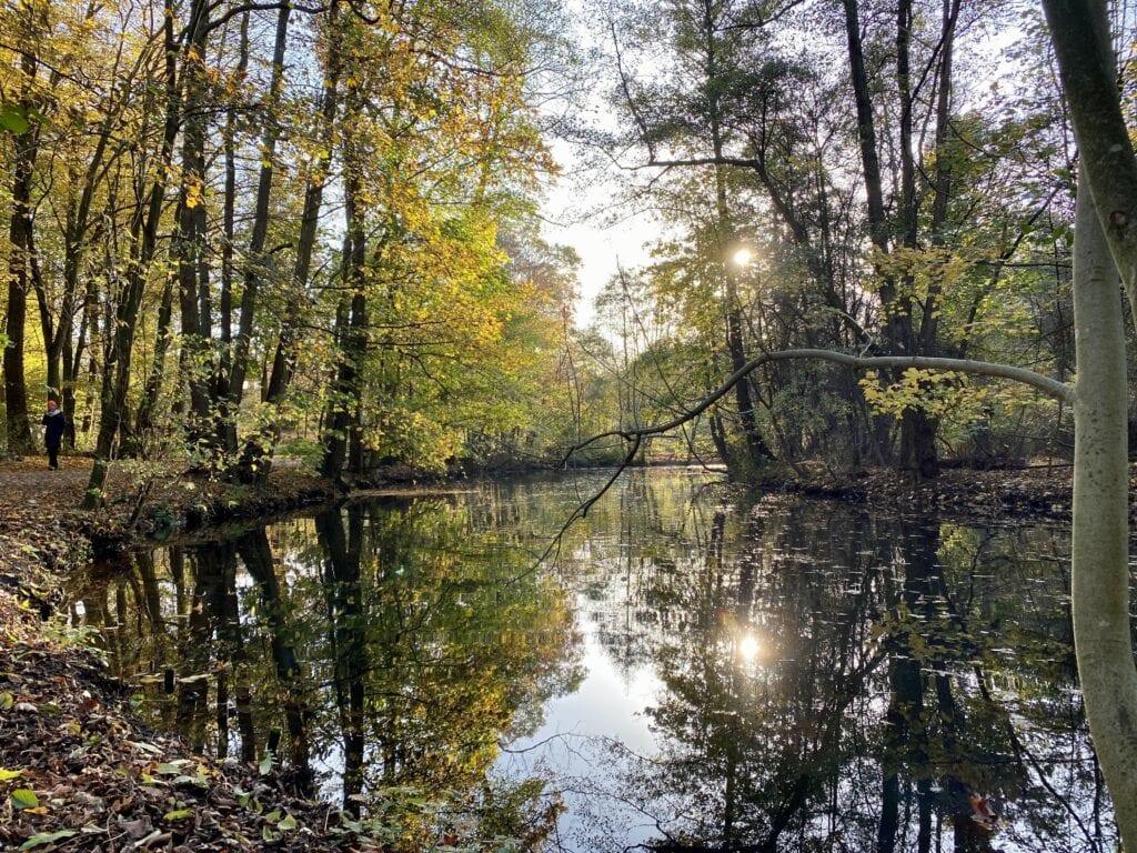 Herbstsonne am Alsterwanderweg - wandern am Alsterlauf zwischen Poppenbüttel und Ohlsdorf