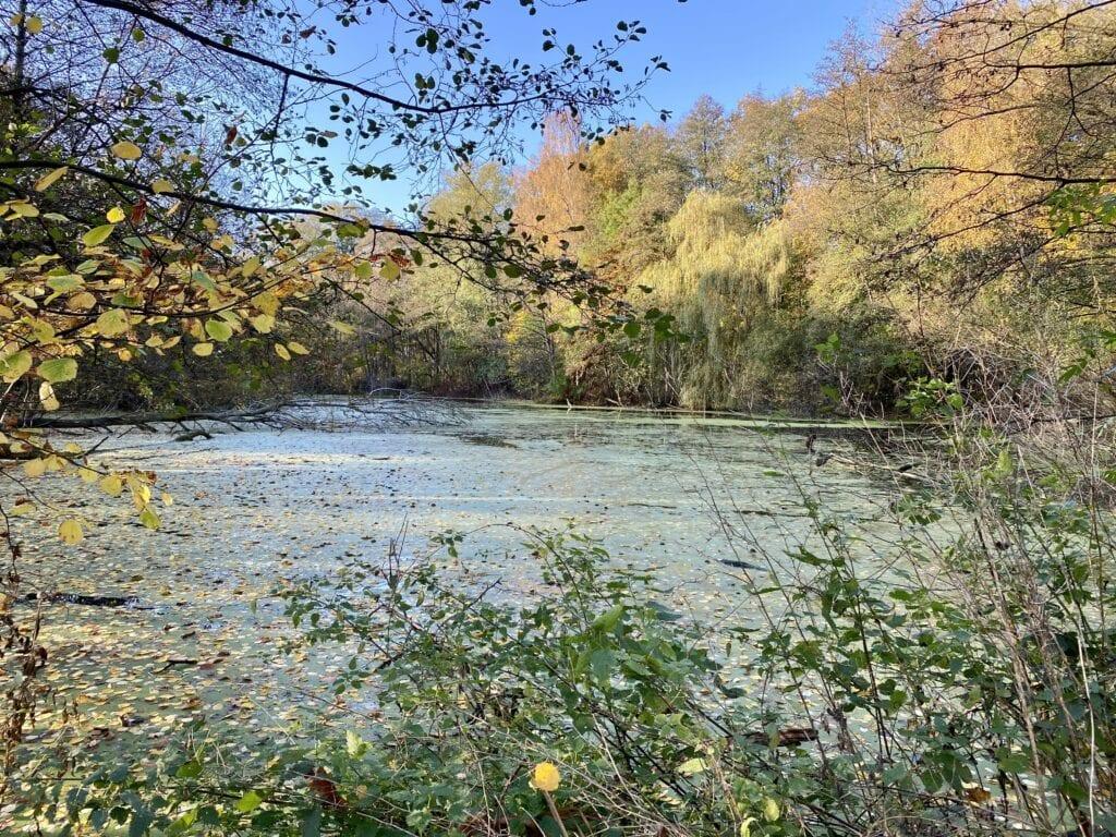 Kleiner Teich am Alsterlauf in Hamburg Wellingsbüttel