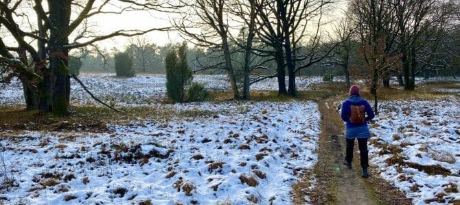 Rundwanderung in der Lüneburger Heide: Von Oberhaverbeck zu Wümmeberg und Tütsberg