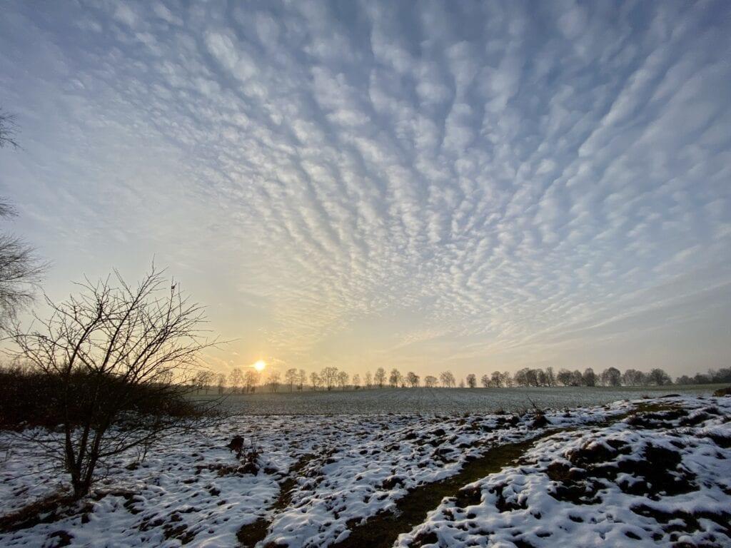 Winterliche Abendsonne bei Tütsberg in der Heide