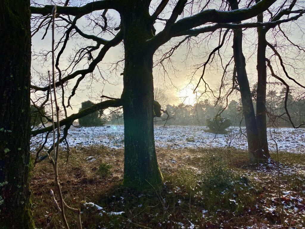 Wintersonne in der Lüneburger Heide