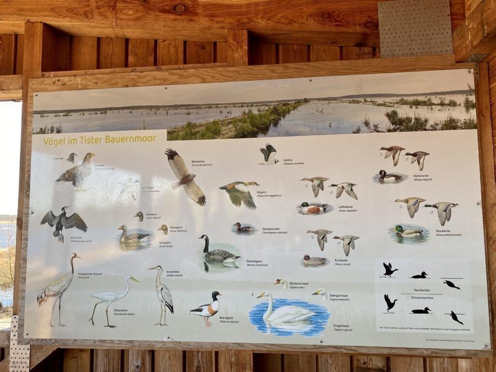 Diese Vögel gibt es im Tister Moor zu beobachten