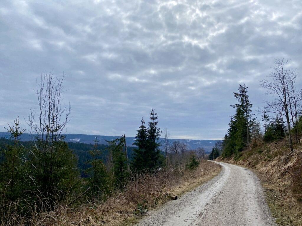 Blick über den Harzwald bei Buntenbock im Oberharz - Wanderung