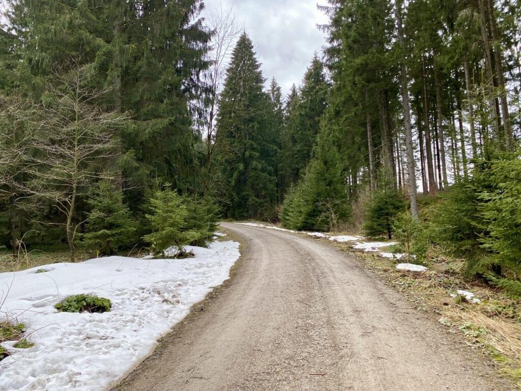 Der Forstweg hinauf zum Braunseck bei Buntenbock