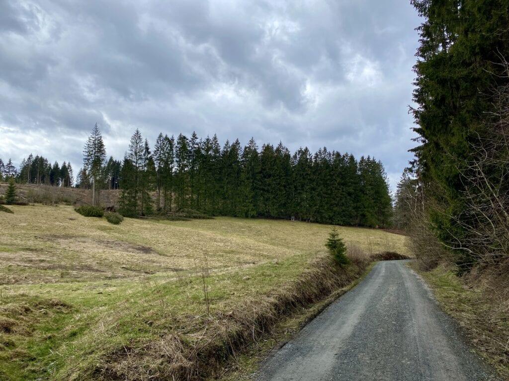 Der Weg zurück nach Buntenbock auf der Wanderung im Oberharz