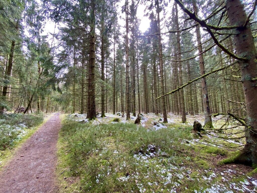"""Im winterlichen Feuchtwald """"Lange Brüche"""" bei Buntenbock im West-Harz"""