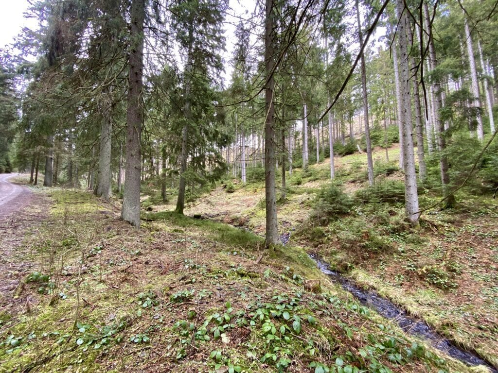 Waldidylle im West-Harz bei Buntenbock