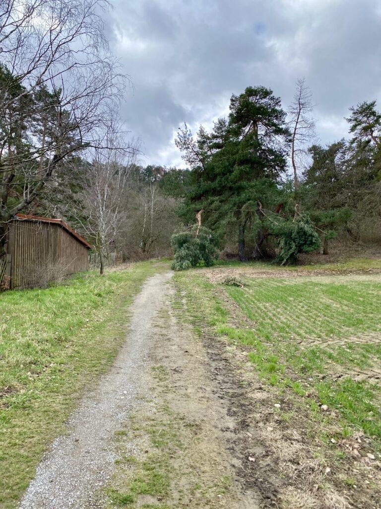 Weg hinter Helsungen: Da gehts in den Wald und hinauf zur Teufelsmauer