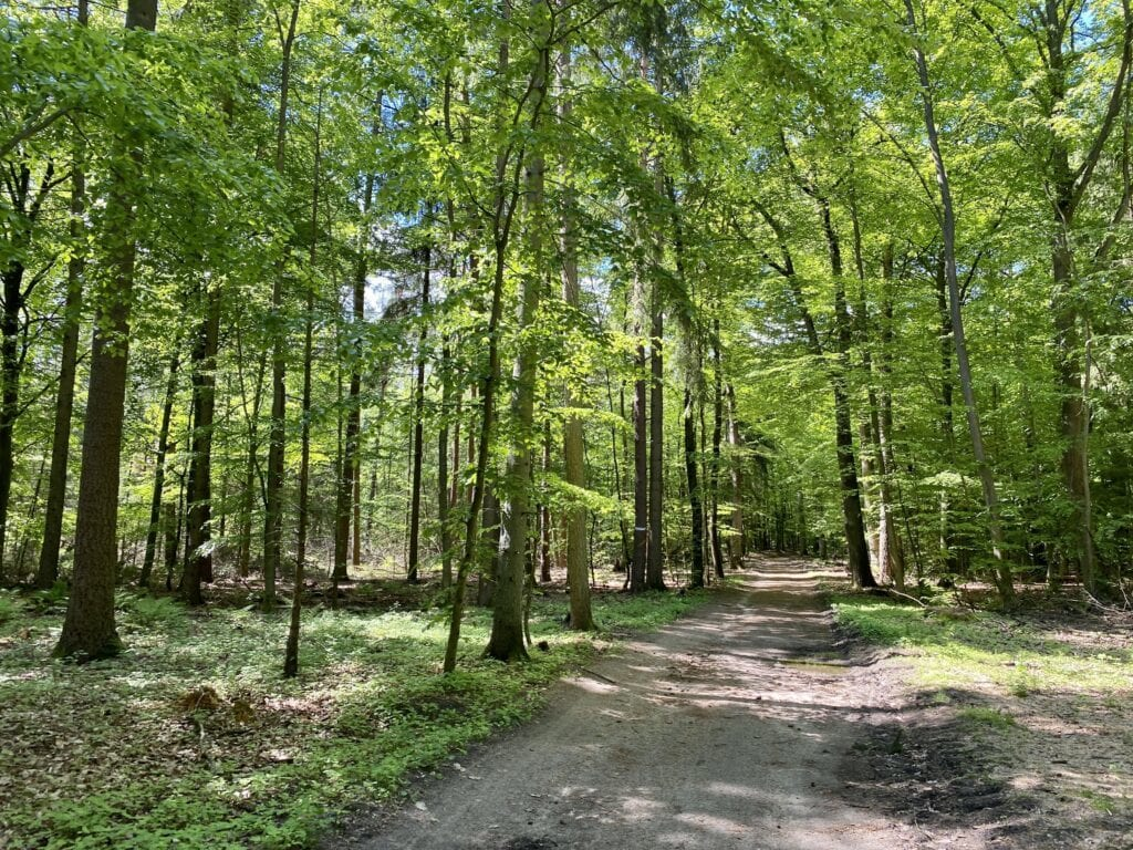 Der Waldweg zurück nach Tesperhude