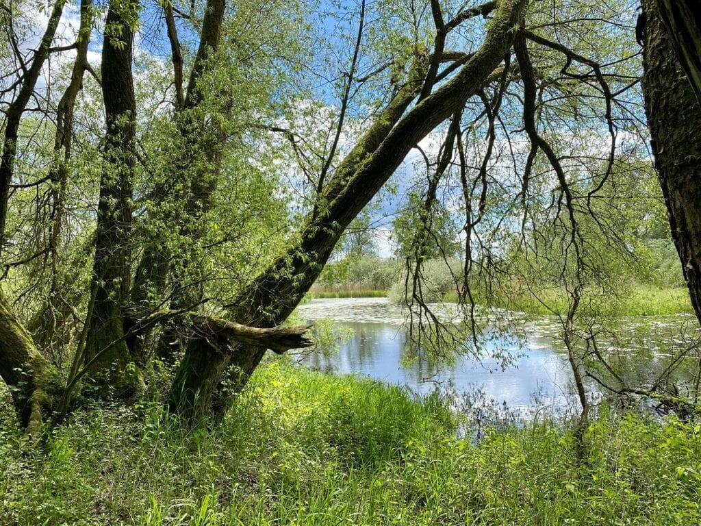 Flussaue und Biberhabitat an der Elbe zwischen Geesthacht und Lauenburg